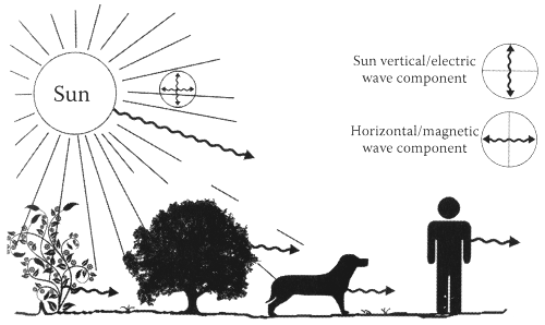 Ce schéma montre la polarisation des ondes. Image : Ibrahim Karim
