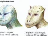 Deux types de reptiliens. Image : Stéphane Cardinaux